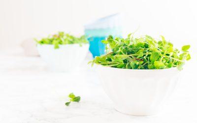 A Taste of NHBP: Summer Salad and Microgreens